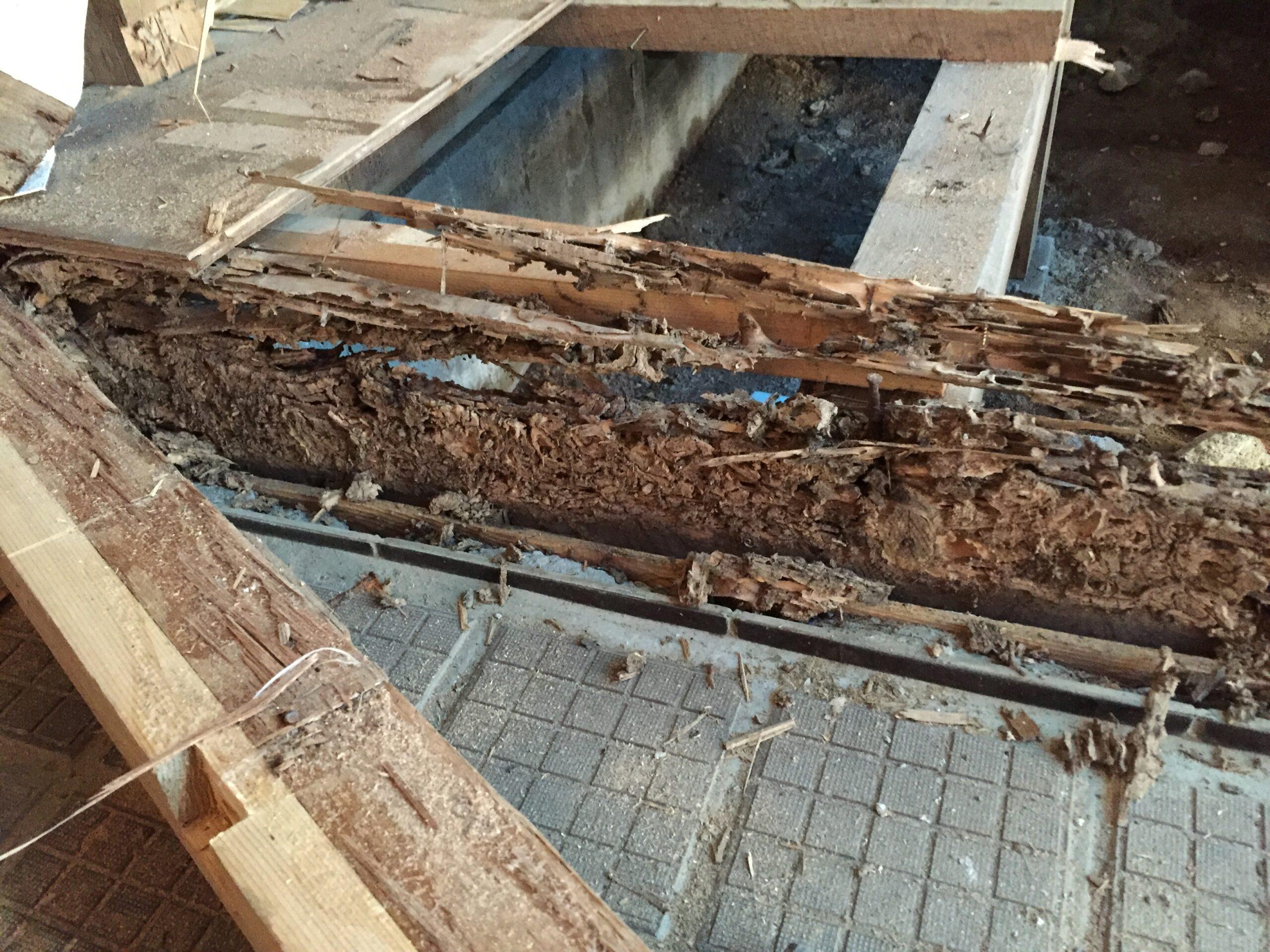 実例紹介。戸建ての床がブカブカ・へこむ原因はシロアリの可能性あり